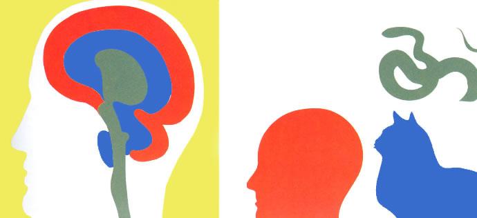 I tre cervelli dell'uomo raffigurati con colori diversi corrispondono alla somma evolutiva dei vertebrati (da Arte e cervello)
